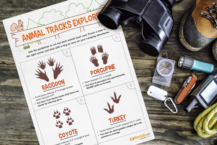 Printable Camping Activities and Games Free Printable